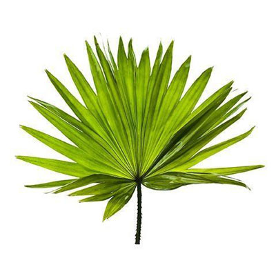 Saw Palmetto Nutratech Vialus ingredients