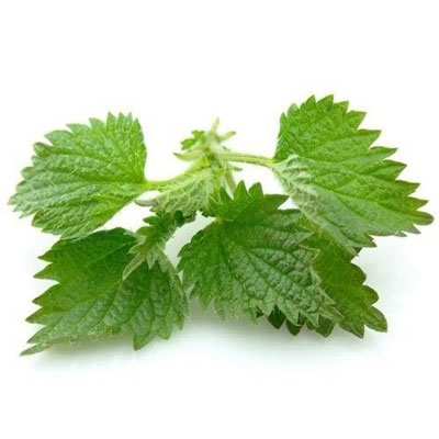 Stinging Nettle Root Extract Betancourt Test-HP ingredients
