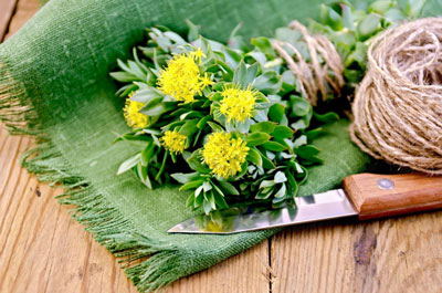 Rhodiola rosea HighT Senior ingredient analysis